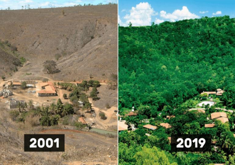 Un français du Brésil replante 2 millions d'arbres