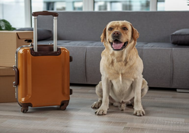 Journée mondiale du Chien : Comment s'expatrier avec son chien?