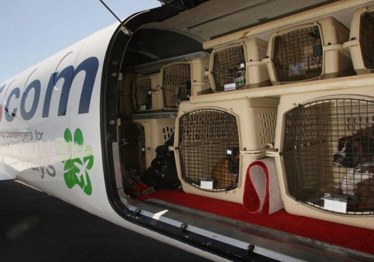 Un chien rejoint ses maitres expatriés mais bloqués en France